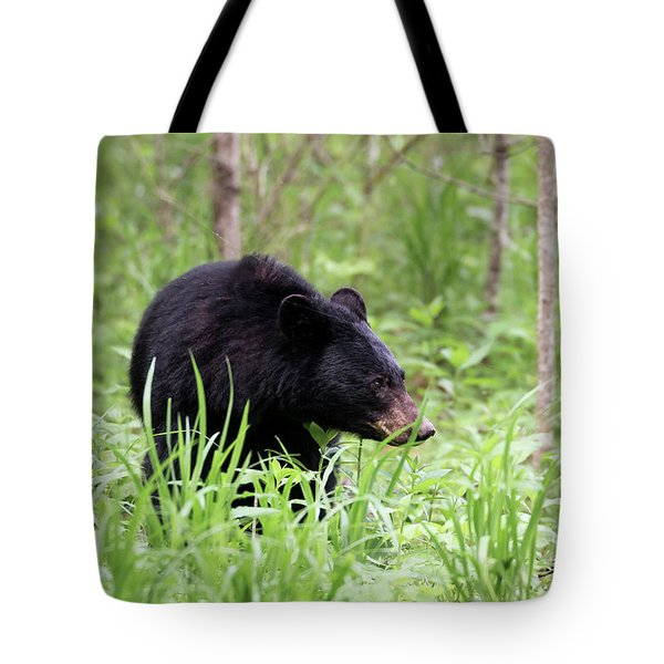 Tote Bag featuring the photograph Black Bear by Andrea Silies