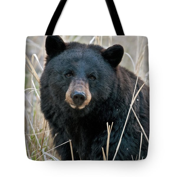 Black Bear Closeup Tote Bag by Gary Langley