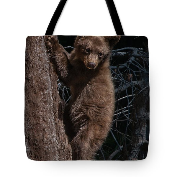 Black Bear Cub Sequoia National Park Tote Bag