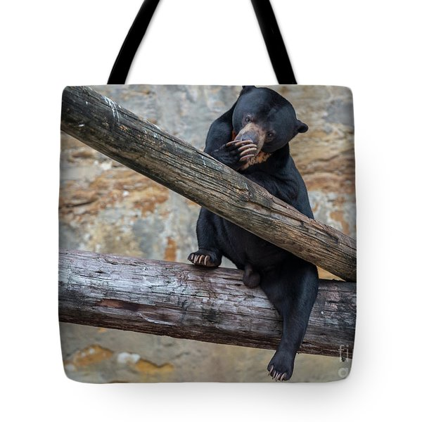 Black Bear Cub Sitting On Tree Trunk Tote Bag