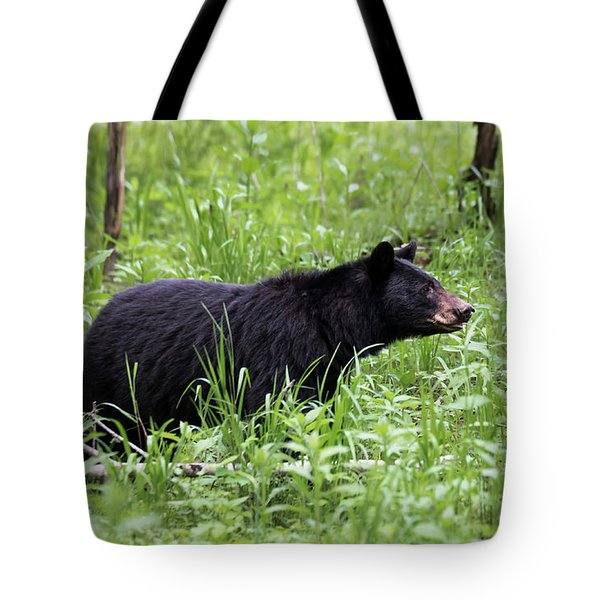 Tote Bag featuring the photograph Black Bear In The Woods by Andrea Silies