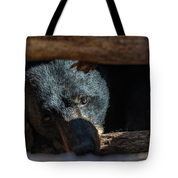 Tote Bag featuring the photograph Black Bear by Phil Abrams