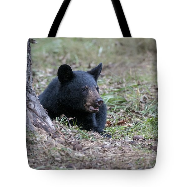 Black Bear Resting Tote Bag