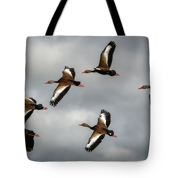 Black Bellied Whistling Ducks Tote Bag
