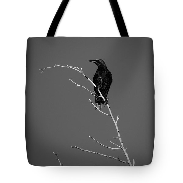 Black Bird On A Branch Tote Bag