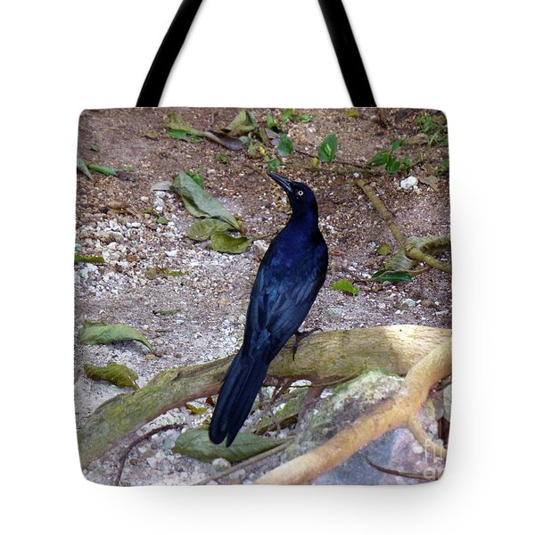 Tote Bag featuring the photograph Black Bird On Branch by Francesca Mackenney