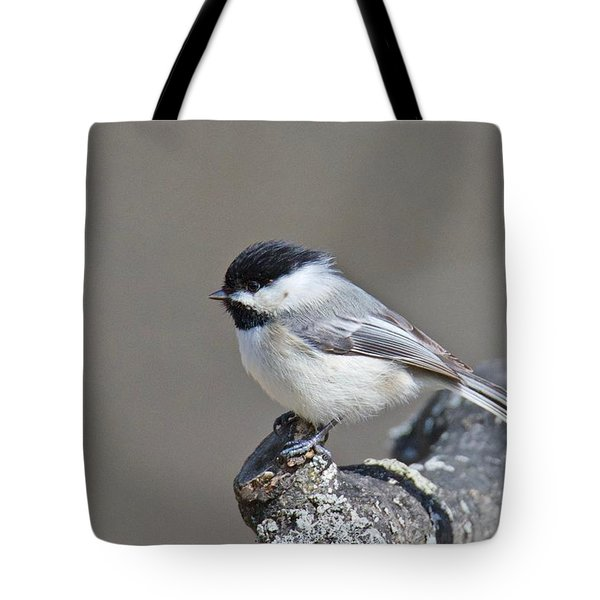 Tote Bag featuring the photograph Black Capped Chickadee 1128 by Michael Peychich