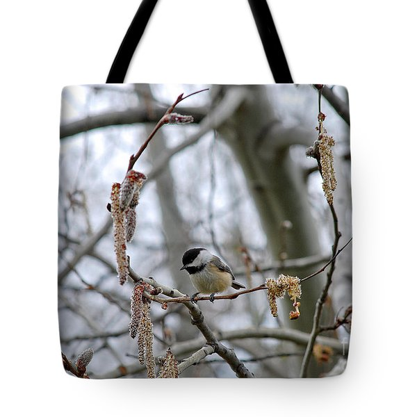 Black-capped Chickadee 20120321_38a Tote Bag by Tina Hopkins