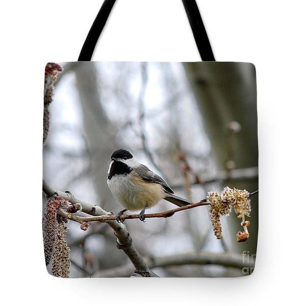 Black-capped Chickadee 20120321_39a Tote Bag by Tina Hopkins
