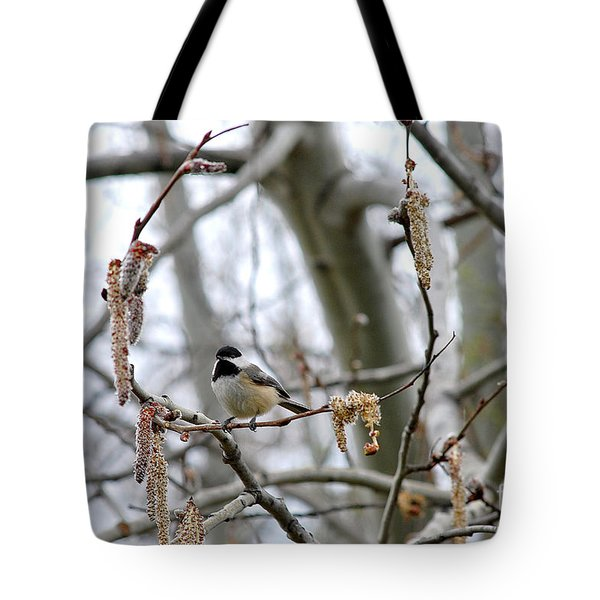 Black-capped Chickadee 20120321_39b Tote Bag by Tina Hopkins