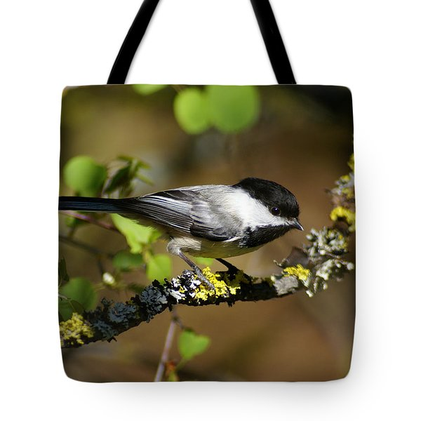 Black-capped Chickadee Tote Bag by Ben Upham III
