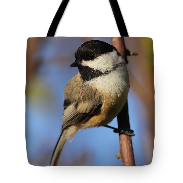Black-capped Chickadee Tote Bag