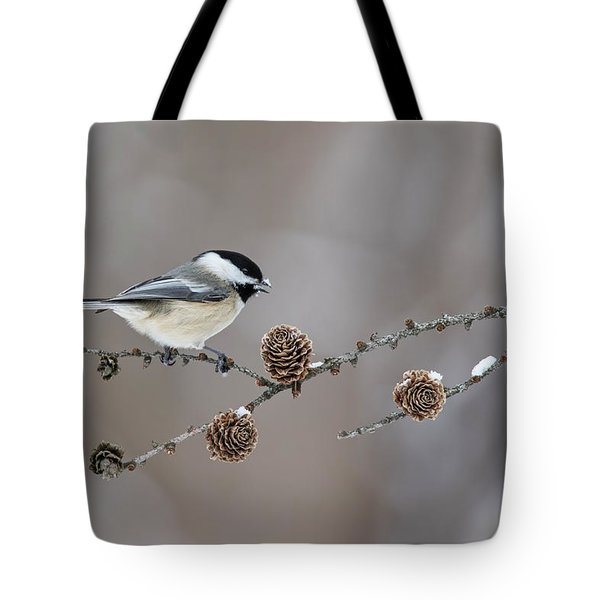 Tote Bag featuring the photograph Black-capped Chickadee by Mircea Costina Photography