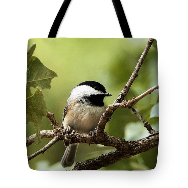Black Capped Chickadee On Branch Tote Bag