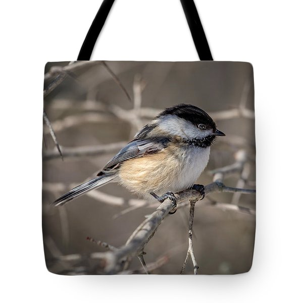 Black-capped Chickadee Iv Tote Bag