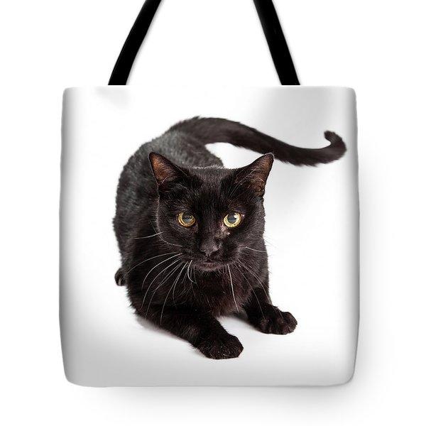 Black Cat Laying Looking At Camera Tote Bag