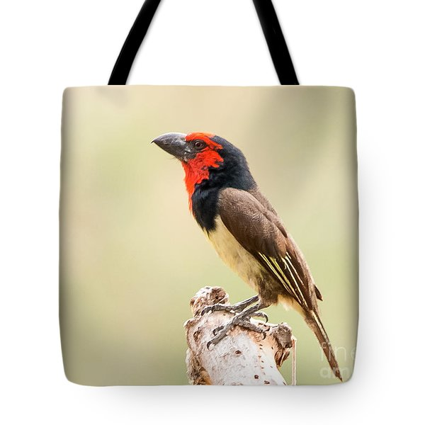 Tote Bag featuring the photograph Black-collared Barbet -   Barbican A Collier - Lybius Torquatus by Nature and Wildlife Photography