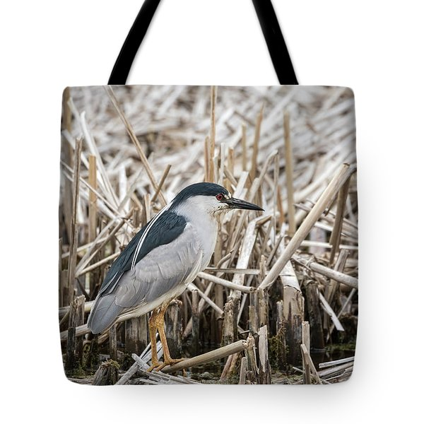Black-crowned Night Heron 2017-1 Tote Bag by Thomas Young