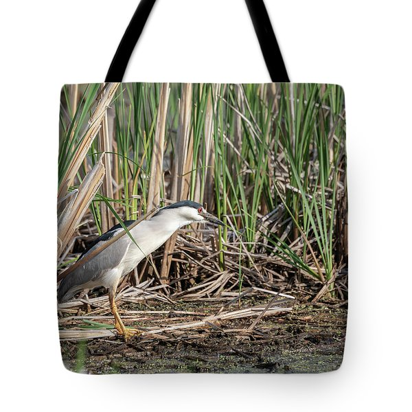 Black-crowned Night Heron 2018-1 Tote Bag