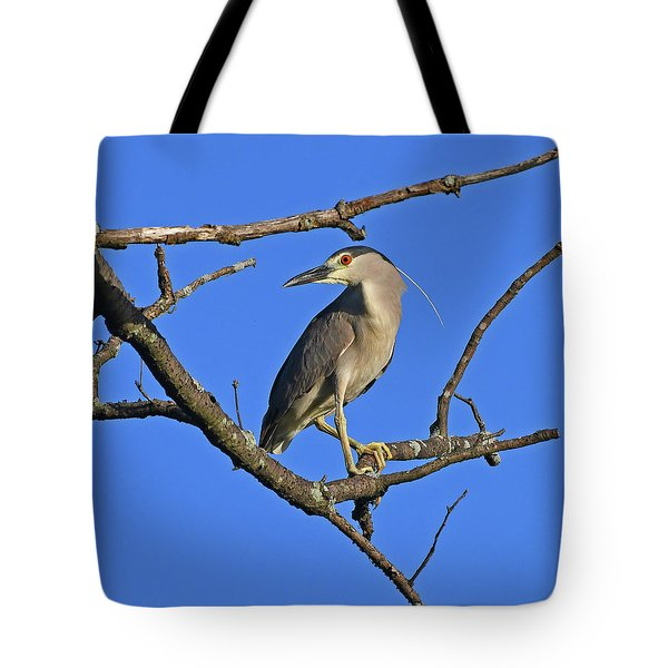 Black-crowned Night Heron Tote Bag