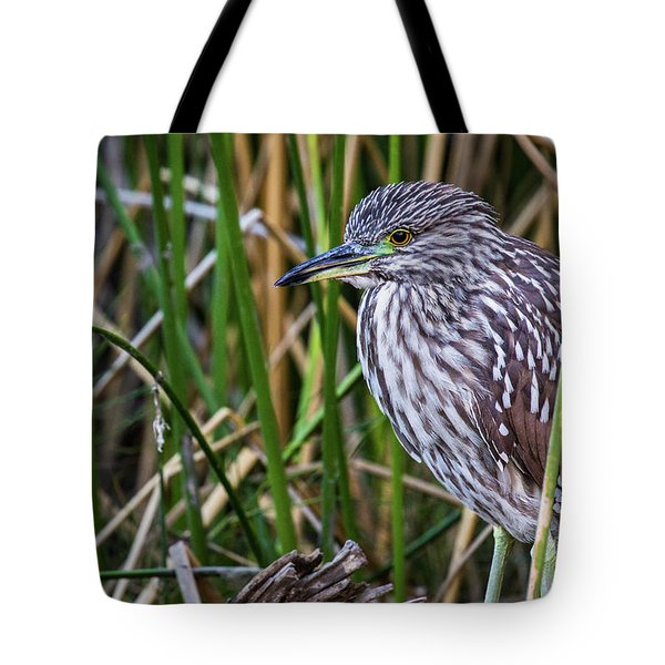 Tote Bag featuring the photograph Black-crowned Night Heron  by Vincent Bonafede