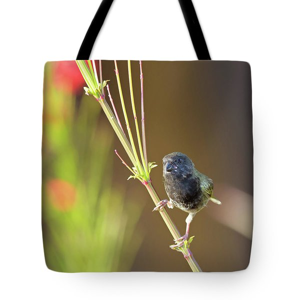 Black-faced Grassquit Tote Bag