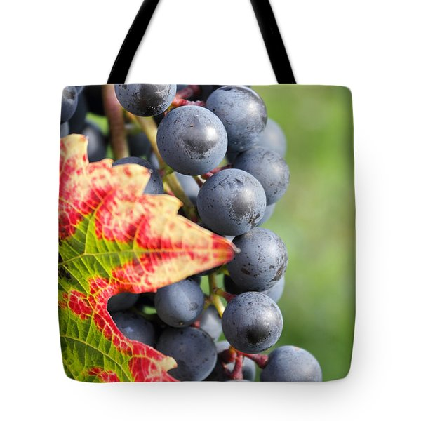 Black Grapes On The Vine Tote Bag