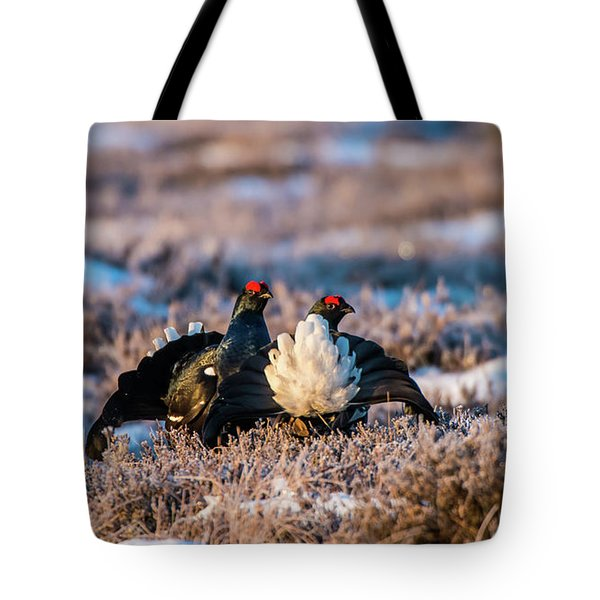 Black Grouses Tote Bag by Torbjorn Swenelius