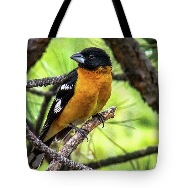 Black-headed Grosbeak Tote Bag