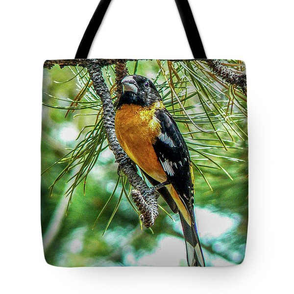 Black-headed Grosbeak On Pine Tree Tote Bag