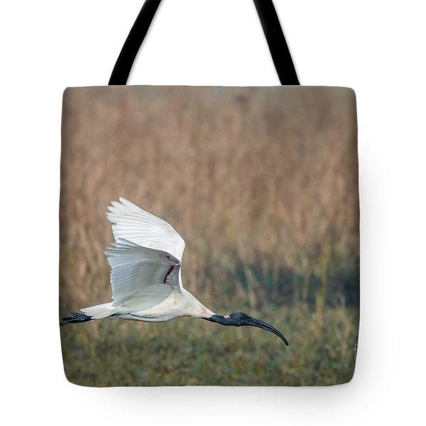 Black-headed Ibis 01 Tote Bag