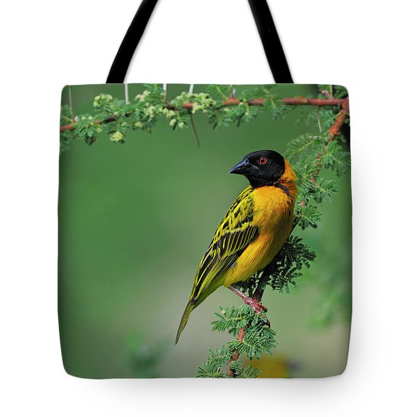 Black-headed Weaver Tote Bag by Tony Beck
