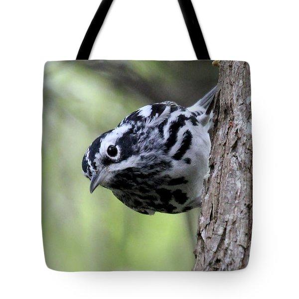 Black-n-white Warbler Tote Bag
