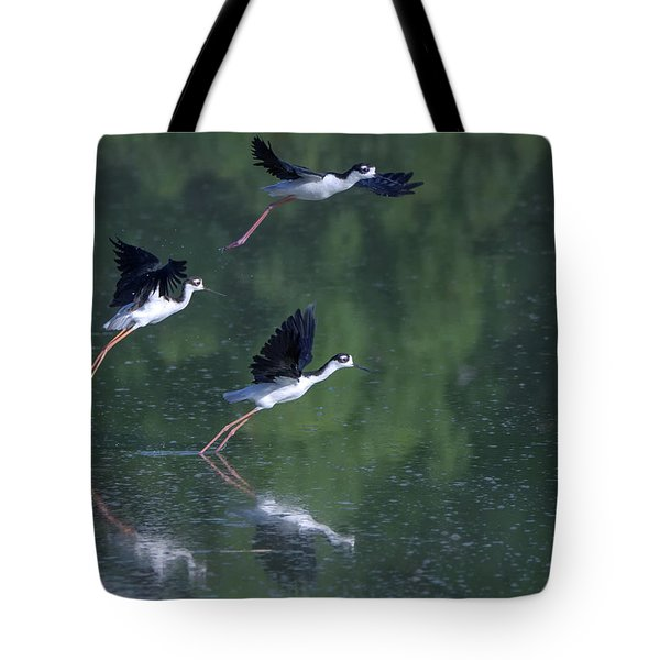 Black-necked Stilts 4302-080917-2cr Tote Bag