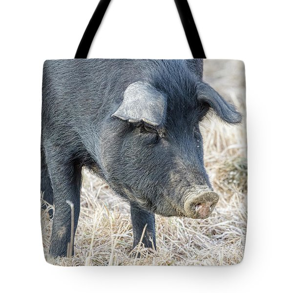 Tote Bag featuring the photograph Black Pig Close-up by James BO Insogna