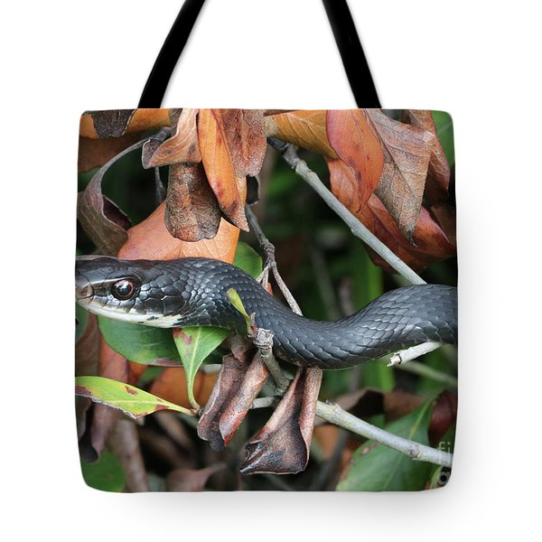Black Racer Snake Stare Down Tote Bag