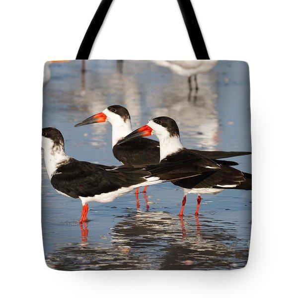 Black Skimmer Birds Tote Bag