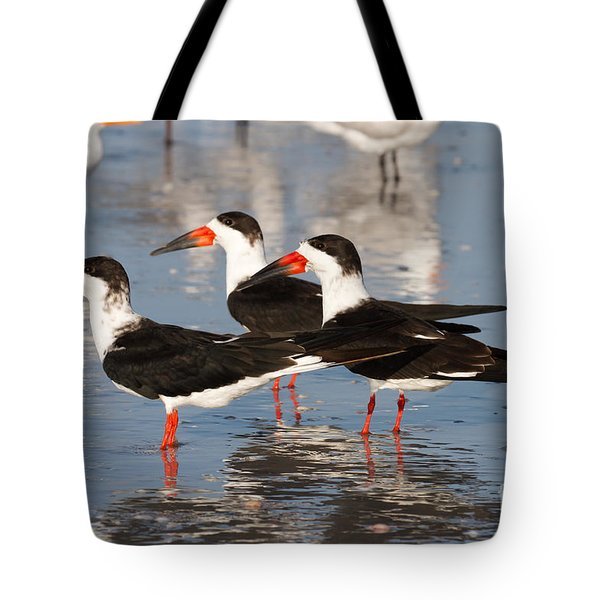 Black Skimmer Birds Tote Bag by Chris Scroggins