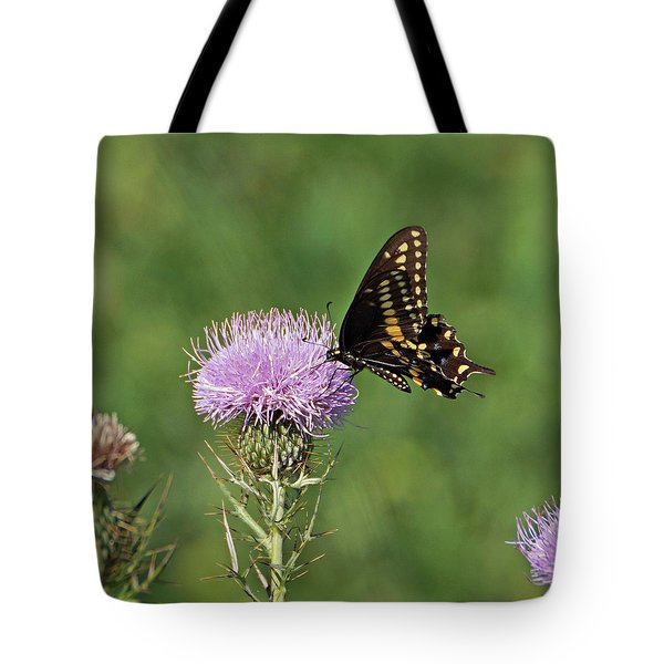 Tote Bag featuring the photograph Black Swallowtail Butterfly by Sandy Keeton