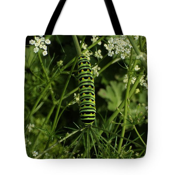 Tote Bag featuring the painting Black Swallowtail Butteryfly Caterpillar by Chholing Taha