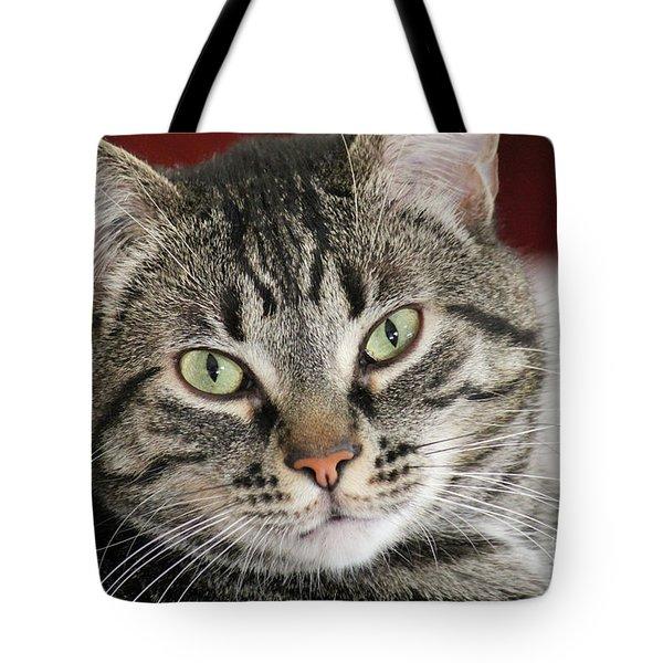 Black Tabby Tote Bag