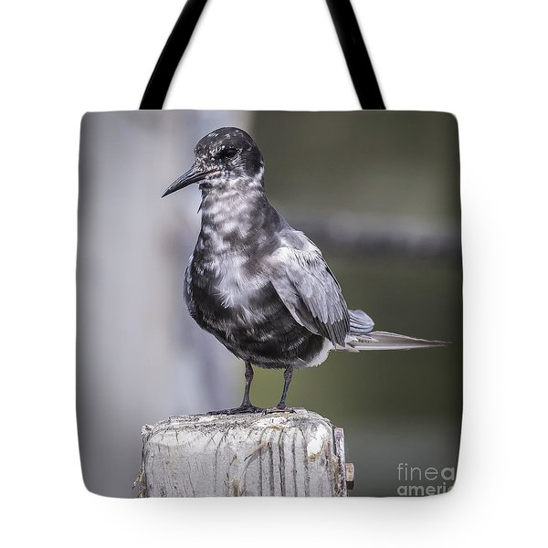 Tote Bag featuring the photograph Black Tern  by Ricky L Jones