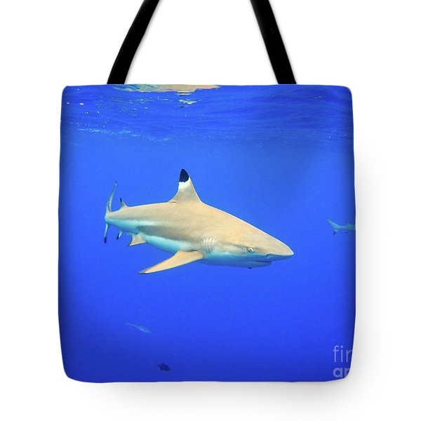 Blacktip Reef Shark Tote Bag