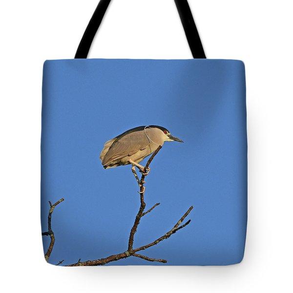 Black-crowned Night Heron Tote Bag