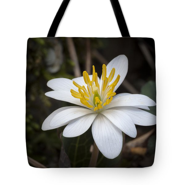 Bloodroot Tote Bag by Tyson and Kathy Smith