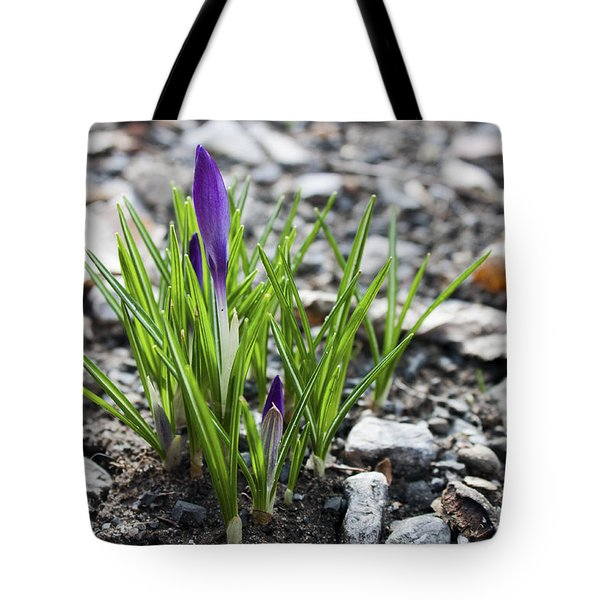 Bloom Awaits Tote Bag by Jeff Severson