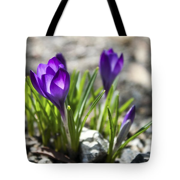 Blooming Crocus #1 Tote Bag by Jeff Severson