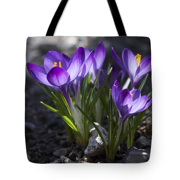 Blooming Crocus #2 Tote Bag by Jeff Severson