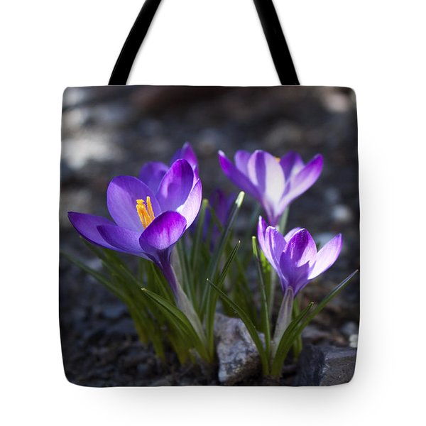 Blooming Crocus #3 Tote Bag by Jeff Severson