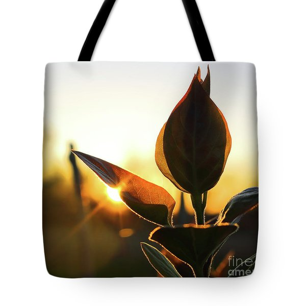 Blooming Lilac At Sunset Tote Bag